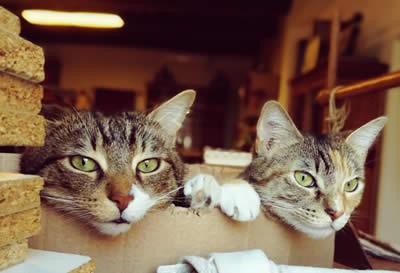 Les chats de l'atelier